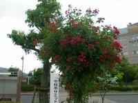 Photo_47